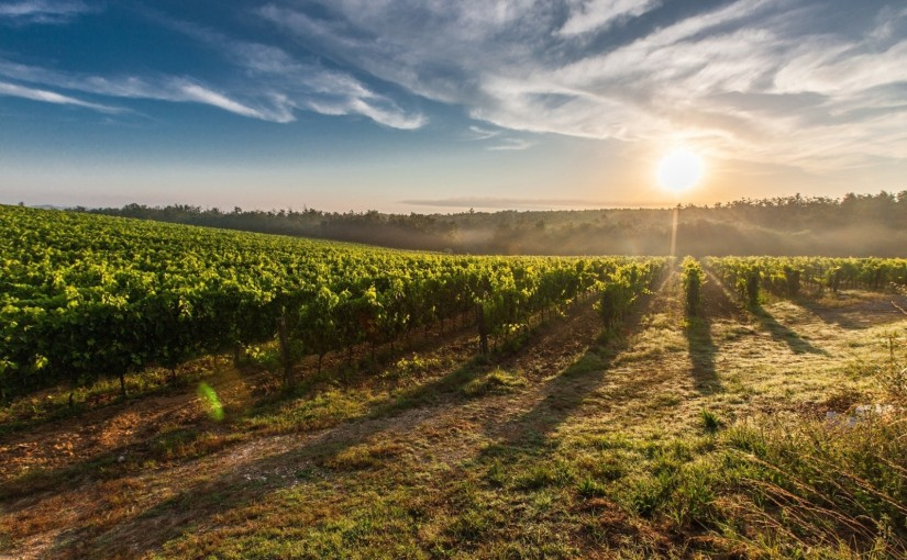 Life of a Tour Guide: Wine scouting around Lucca